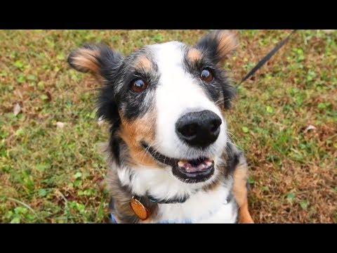 Ben finds loving home after cruelty case