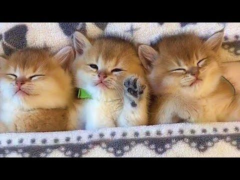Precious Sleepy Kitties Video