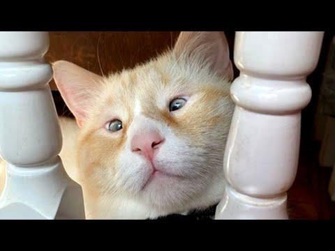 The Cat With Really Small Eyes Video. Your Daily Dose of Internet.