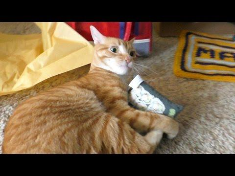 Cole And Marmalade - EPIC Cat Birthday Party!