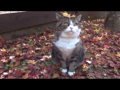 Maru And Hana Cats In Autumn
