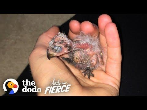 Woman Can't Believe She Found THIS in Her Ceiling | Little But Fierce