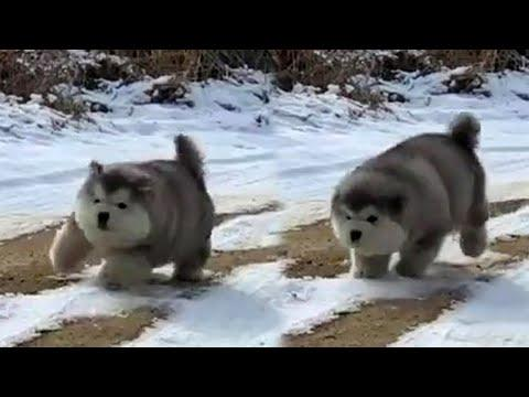 Bouncing Puppy's Video