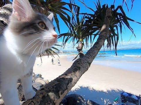 CAT'S DAY AT THE BEACH