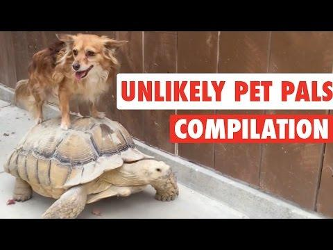 Unlikely Pet Pals    Funny Pet Compilation