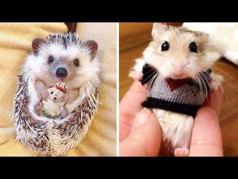 Cute baby animals Videos Compilation cutest moment of the animals - Soo Cute! #20