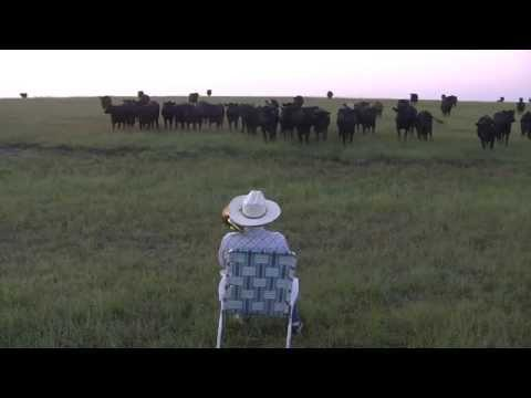 Farmer Serenades Cattle With Trombone