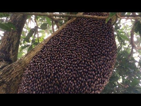 Beehive Makes Mesmerizing Defensive Wave -  YOUR Daily Dose Of Internet