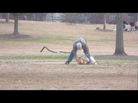 Lazy Dog Doesn't Want To Leave The Park