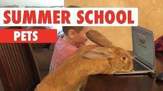Summer School Pets