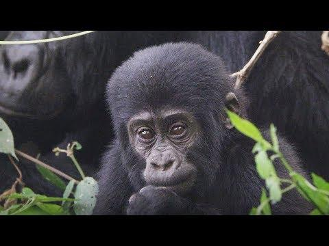 Baby Learning How to Gorilla | First Year on Earth | BBC Earth