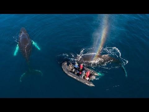 Unbelievable Whale Encounter! #Video