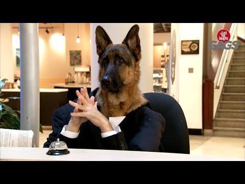 Dog Works At the Informational Kiosk