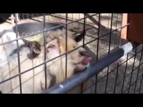Cute And Funny Animals Best Of January 2016