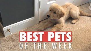 Best Pets of the Week   October 2018 Week 1