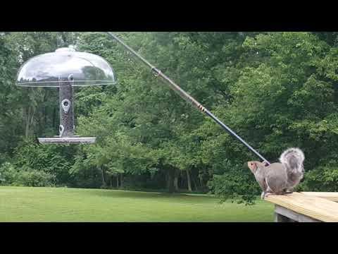 Slinky Squirrel Video
