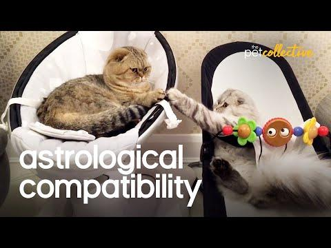 Pet Compatibility Video