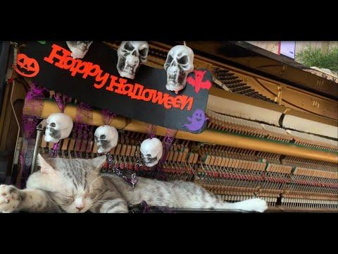 Happy Halloween Meowsic. Haburu Video