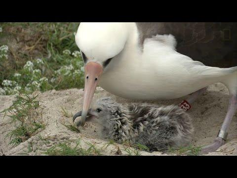 Amazing Bird: Age 65, May Have Had 40 Chicks, Traveled Three Million Miles