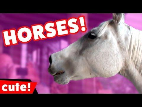 Funny Horse Videos Compilation 2016
