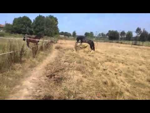 Horse Relaxes On Hay Bale