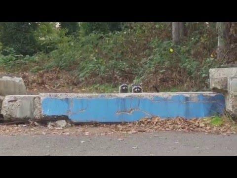 Raccoon Whack-A-Mole
