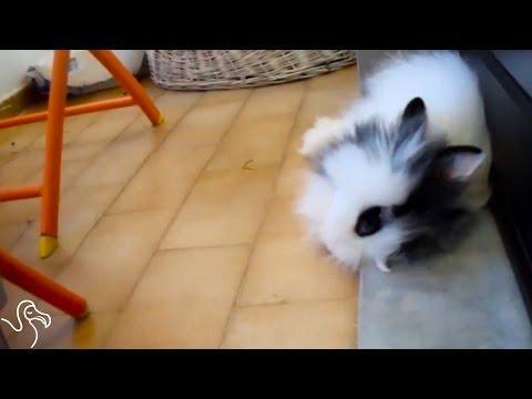 Bunny Flops