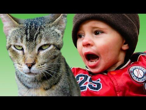 21 Pets Get Sweet Revenge On Kids