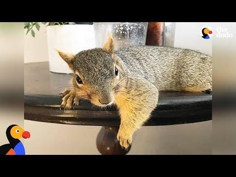 Woman Rescues Baby Squirrel — Then Becomes A Complete Squirrel Mom #Video