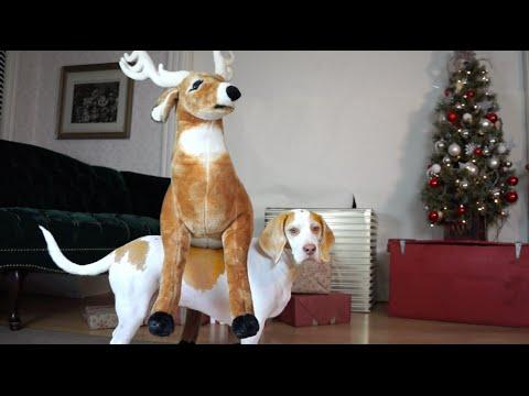 Dog Loves Reindeer Gift On Christmas: Cute Dog Maymo