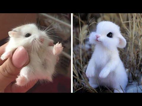 Cute baby animals Videos Compilation cutest moment of the animals - Soo Cute! #17