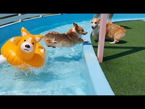 2020 Corgi Pool Picnic Video
