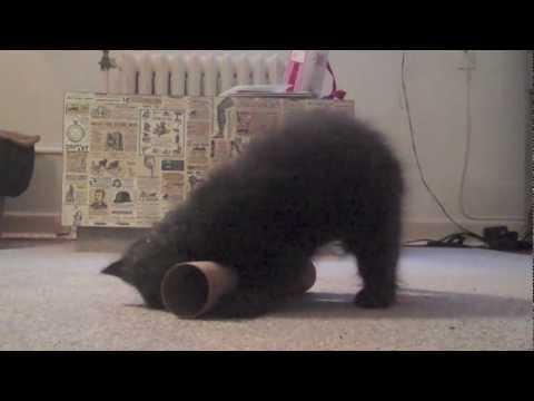 Cat Yoga ( Black Kitty + Yoga = Big Smiles! )