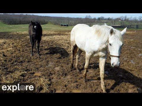 Kentucky Equine Horses Web Cam