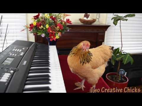 Chicken Plays Operatic Aria on Piano Keyboard Video