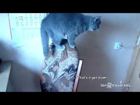 Russian Cat Closes Doors On Command