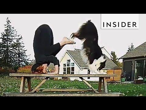 Meet The Dog That's A Yoga Pro #Video