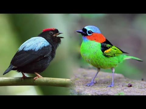 10 Most Beautiful Small Birds in the World #3