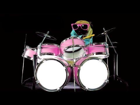 Dog Is Playing Drums - Drum Solo