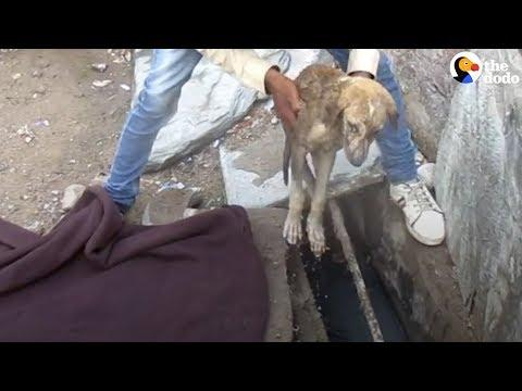 Sick Stray Puppy Heals Thanks To His Rescuers