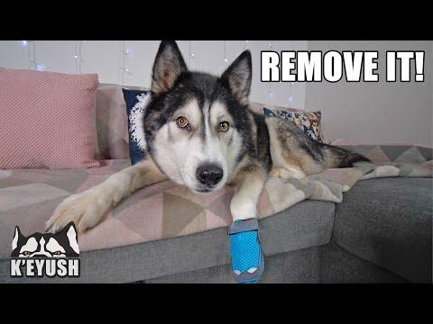 Husky NOT Happy About Wearing a Boot it! He HATES it! #Video