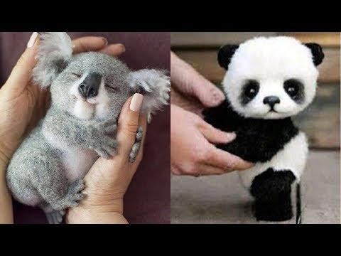 Cute Baby Animals Videos – Funny Baby Animals – Cute Moment of the Animals – Soo Cute Video