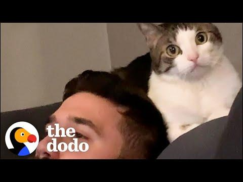 Woman Becomes Third Wheel In Her Cat And Husband's Relationship. #Video