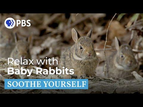 Relax with Baby Rabbits | Soothe Yourself | PBS NATURE