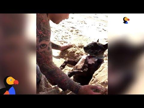 Dog Loves When Dad Buries Him In The Sand