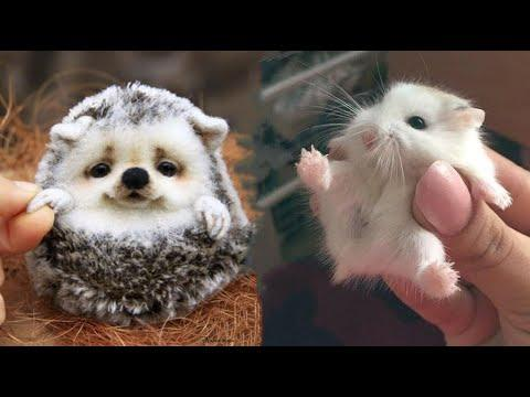 AWW SO CUTE! Cutest baby animals Videos Compilation Cute moment of the Animals - Cutest Animals #9