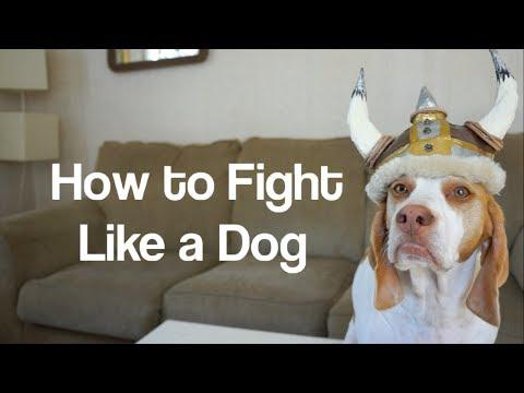 How To Fight Like A Dog With Cute Dog Maymo