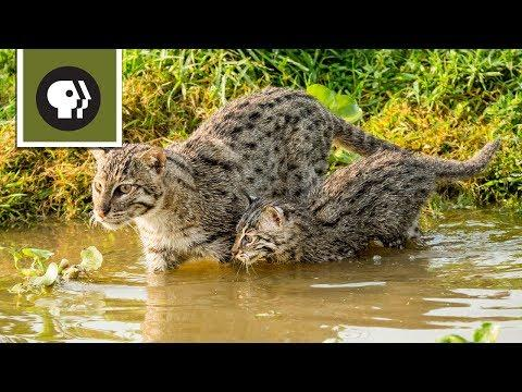 Fishing Kittens See Water For the First Time