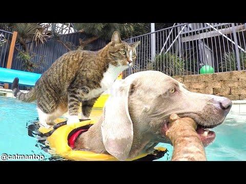 Cat Goes Surfing With Dog Friend