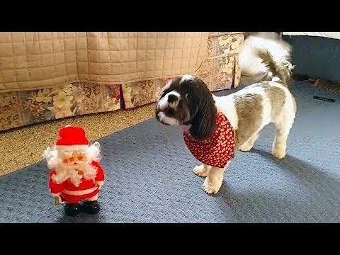 Adorable Dogs who Don't Like Christmas